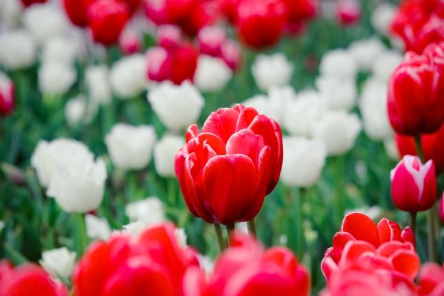 выставка тюльпанов ялта