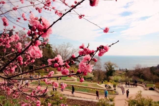 фото ялта весна